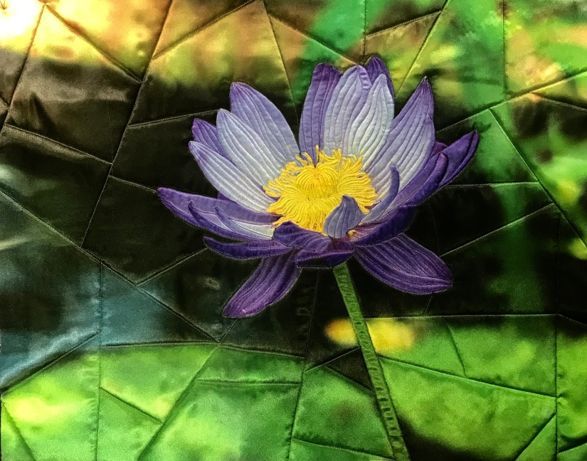 Water Lily by Teresa Schlabach